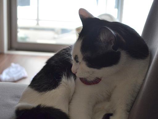 cat (4).jpg